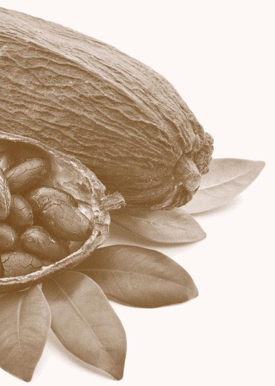 Kakao Big Image